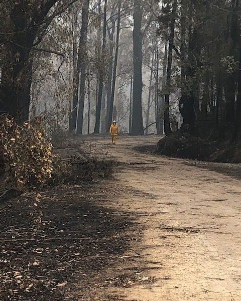 Gippsland Bush fires Jan 2020 (Bemm Forest)