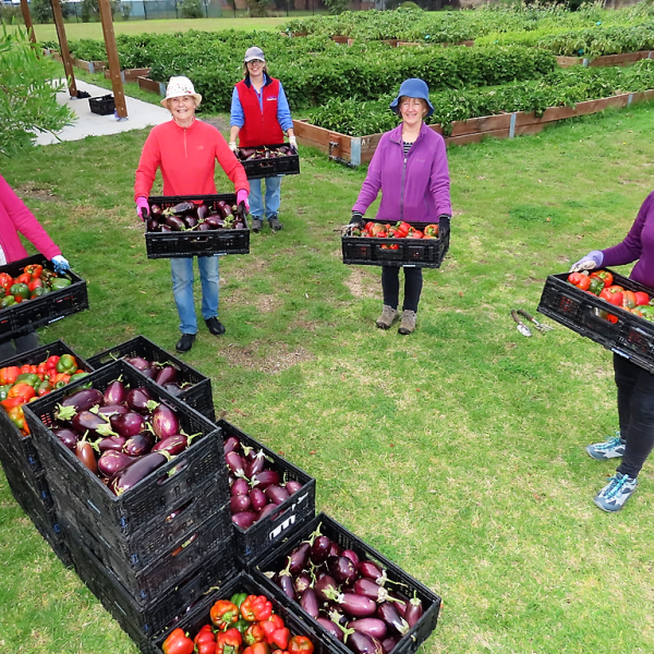 Moorabbin kitchen garden volunteers with their colourful harvest of eggplants and capsicums