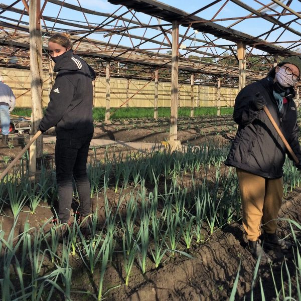 Masked volunteers with at Baguley Farm tending our leeks