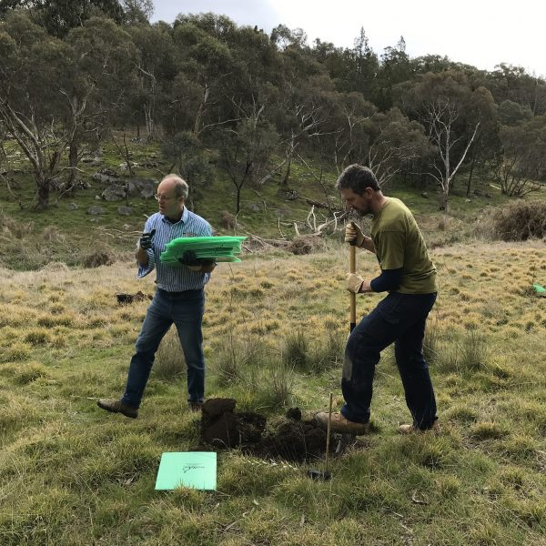 Planting Silver Banksia (Banksia marginata) in north east catchments as seed production areas and habitat.
